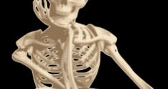 Human Anatomy: Now Shake Them Skeleton Bones
