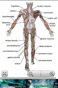 Human Anatomy Android App Review